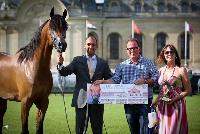 Eos Arabians Kathrin Hampe Klingebiel News